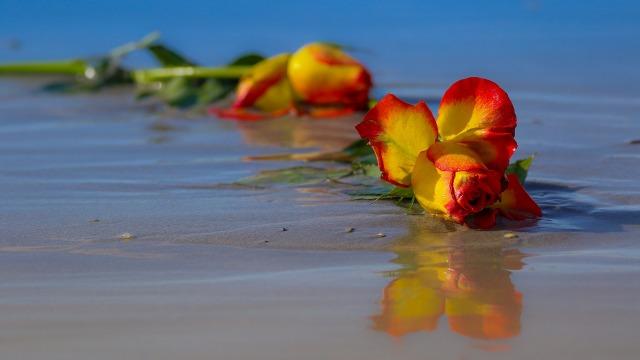 rose-2335203_1920